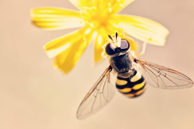 Dbajmy o pszczoły nie tylko w dniu ich święta