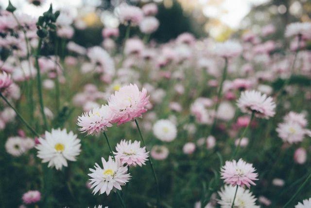 Łąka kwietna w ogrodzie. Jak ją założyć i pielęgnować?